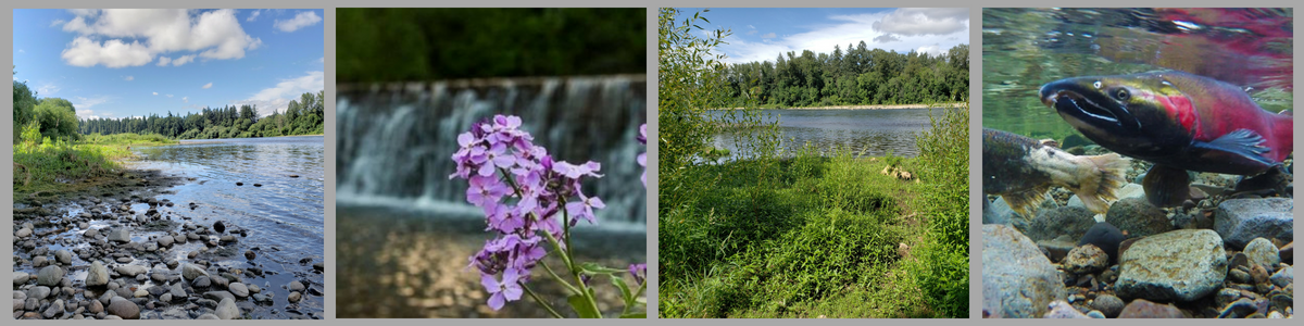 Banner with pictures of a river, a flower in front of a waterfall, another river, and a salmon under water