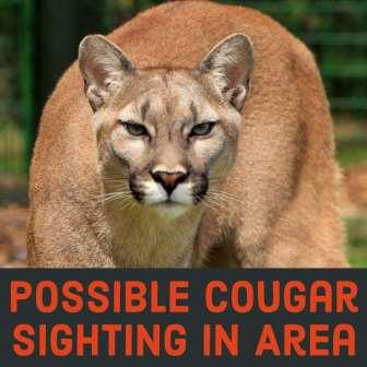 Possible Cougar Sighting Near Joryville Park