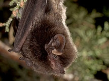 Bat tests positive for rabies